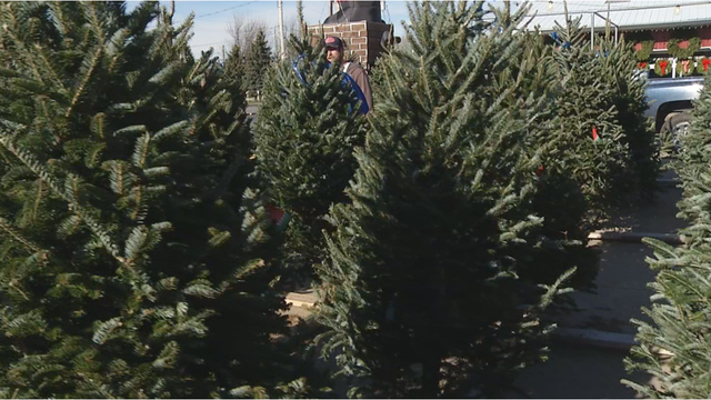 cost of - How Much Do Real Christmas Trees Cost