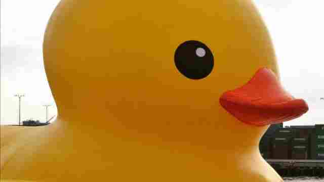 World\'s biggest rubber duck coming to Canalside in August