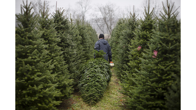 places to cut down your own christmas tree this season - Cut Your Own Christmas Tree