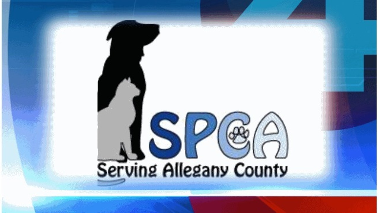 140 animals seized in Allegany County