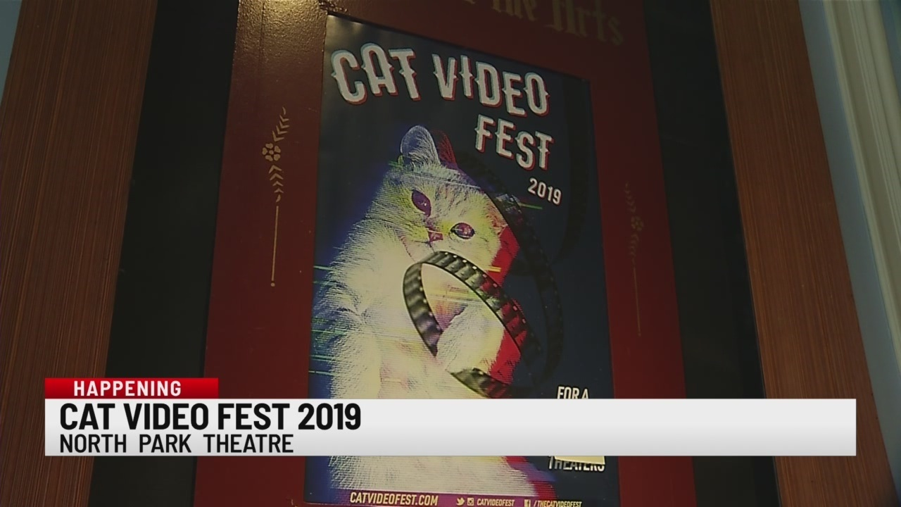 North Park Theatre shows cat videos on big screen