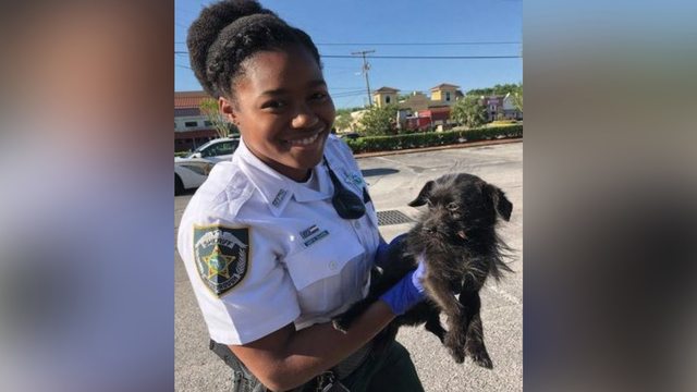 Hillsborough deputy saves dog after animal gets caught in car's grille