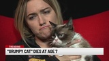 Internet sensation Grumpy Cat dies