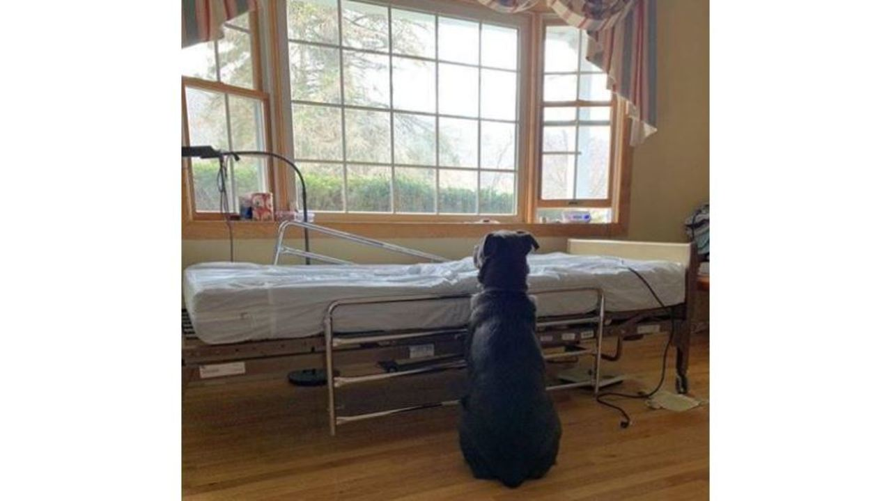 dog finds a home after photo goes viral of him waiting for