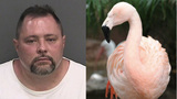 Man accused of killing Busch Gardens flamingo dies after being struck by pickup truck